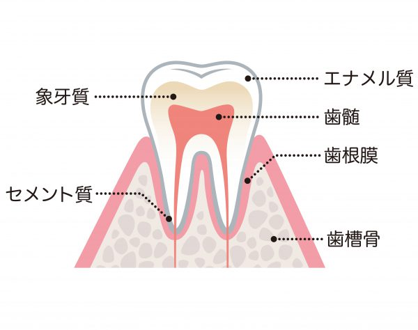 痛い の 法 対処 歯 が 時 歯がぐらぐらして痛い時の応急処置と治療ーノーブルデンタルクリニック仙台(仙台駅東口・日曜診療・夜間診療)