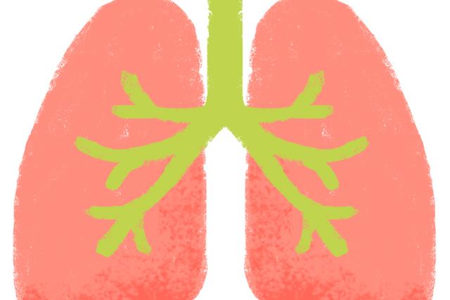 秋は「肺」をうるおすことが、健康と美容に良いらしい