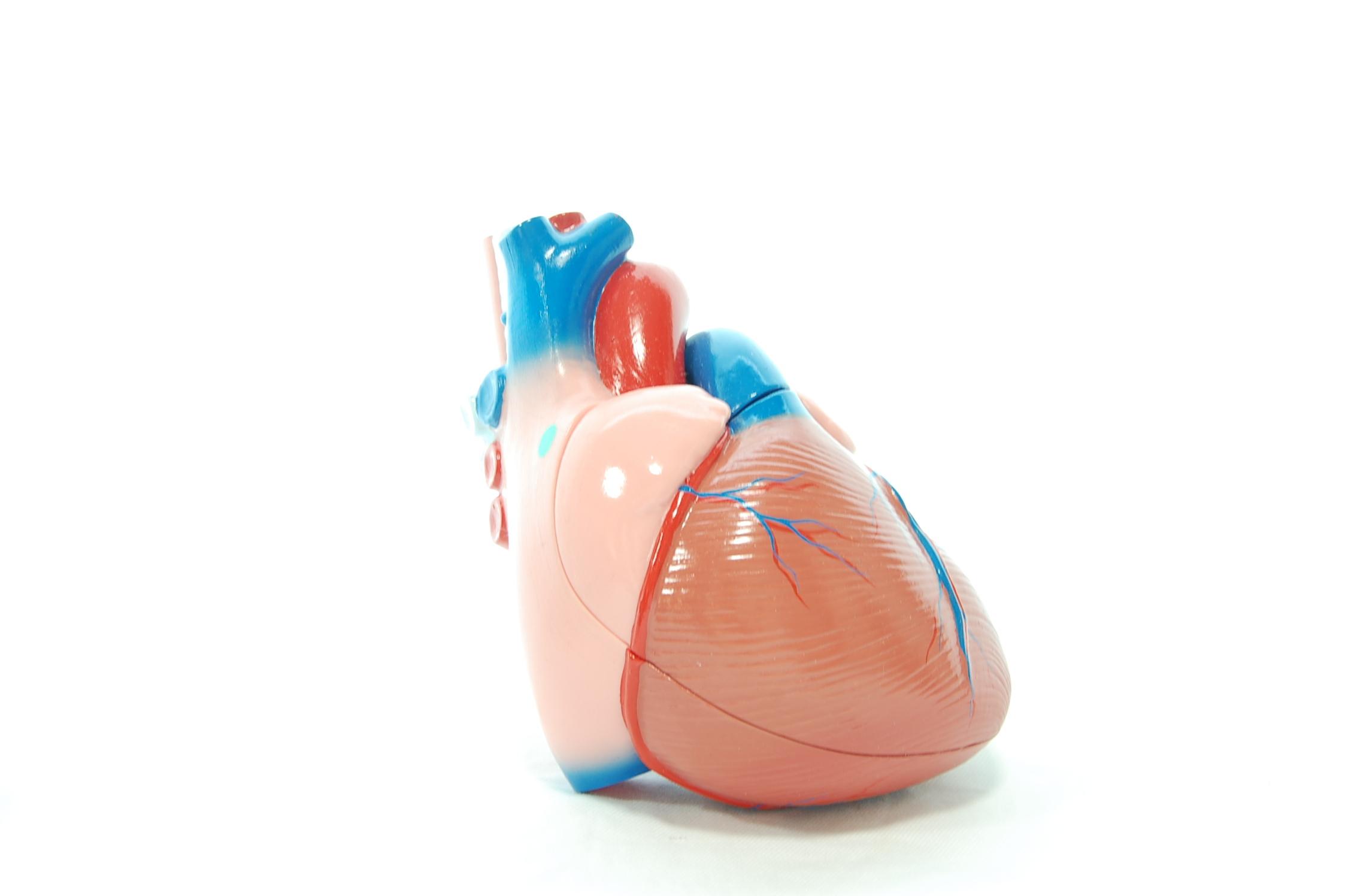 心臓の冠動脈が機能低下して起きる狭心症